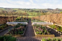 The veg beds in the Yeo Valley organic garden in spring