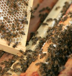Yeo Valley are working to put bee hives across dairy farms