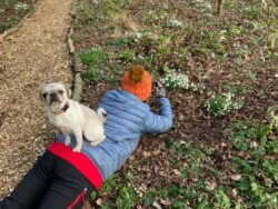 The dog helping to take snowdrop photo in the Yeo Valley Organic Garden