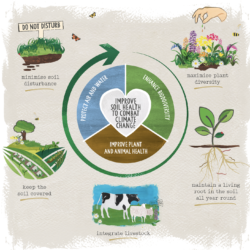 regenerative farming cycle
