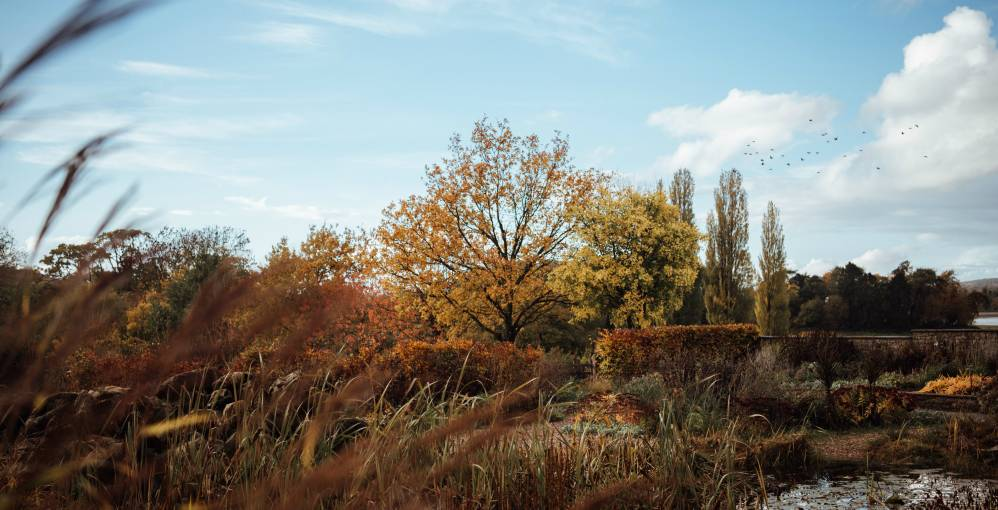 autumn in the Yeo Valley organic garden