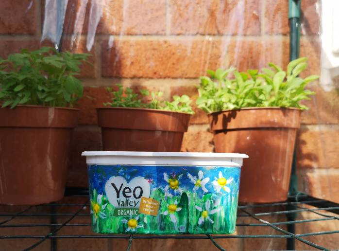 Make a wildflower garden from your empty Yeo Valley organic butter tub