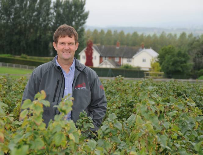 Anthony Snell grows blackcurrants for Yeo Valley Organic yogurts