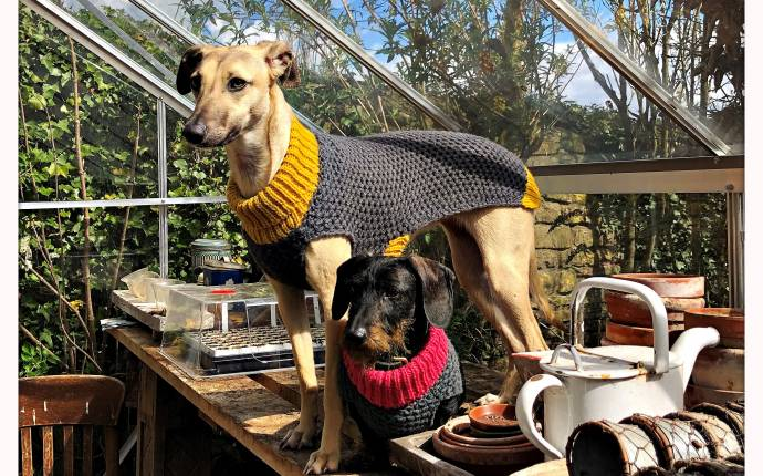win chic doggy accessories from Lish London