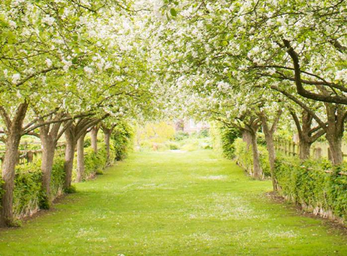 Blossom at the Yeo Valley Organic Garden