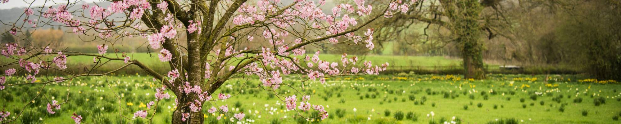 Pink Blossom for a spring garden